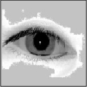 Applying Iris Images to PIV Cards